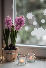 Pink Hyacinths In A Wooden Tub, Candles In Transparent Candlesticks.