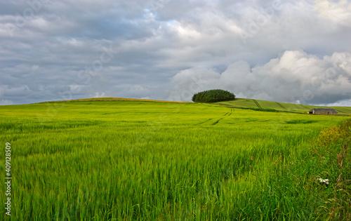 Fotografie, Obraz Rural Landscape In The East Neuk Of Fife Near Upper Largo, Scotland, United King