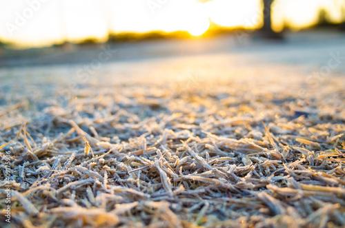 Fototapeta 霜の付いた芝生 obraz