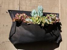 Succulents In Sack