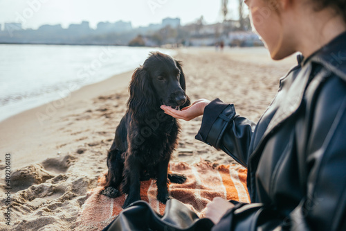 Tela Young woman hand feeding her black spaniel dog