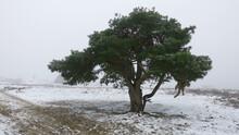 Majestic Tree In A Barren Landscape In Winter Time
