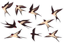 Colorful Flying Swallows Flat Illustration Set. Cartoon Birds Flock In Fight With Different Poses Isolated Vector Illustration Collection. Wildlife And Fauna Concept