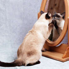 The Cat Looks At Itself In A Wooden-framed Desk Mirror.