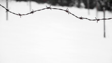 Barbed Wire Surrounding Private Property, Winter Composition, Snow Falling, Frozen Nature, Winter Time Background With Copy Space