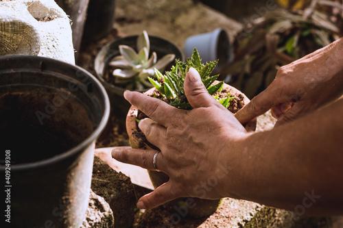 Obraz Cuidando das Plantas - fototapety do salonu