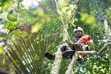 Man Tree Climbing On Canopy Top In Green Rainforest Landscape
