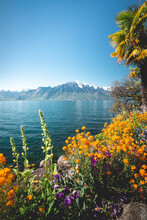 Lakeside Flora In Swiss Town