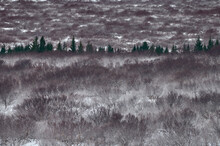 Snowy Forest With Leafless Trees And Firs