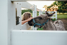 Little Boy Pets Miniature Donkey On Farm