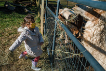 Young Child Girl Feeding Farm Animals Pony And Alpaca