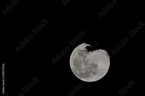 月, 夜, 空, 空間, 全部, 天文学, 月の, コップ座, 惑星, 黒, 暗い, 満月, 明るい, 球体, サテライト, コップ座, ルナ, 光, 月光, Wallpaper Mural