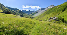 Beautiful Hiking Path Through Wildflower Meadows, Gafier Valley, Switzerland