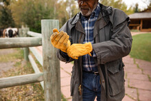 Male Rancher Putting On Yellow Working Gloves On Ranch