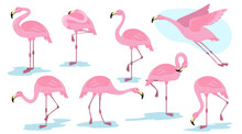Pink Flamingo Bird In Different Poses Flat Set For Web Design. Cartoon Flamingo Standing, Flying And Resting Isolated Vector Illustration Collection. Vacation, Wildlife And Animals Concept