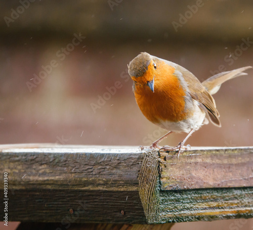 Obraz na plátně close up of a robin redbreast standing on the edge of a wooden bird feeder tray