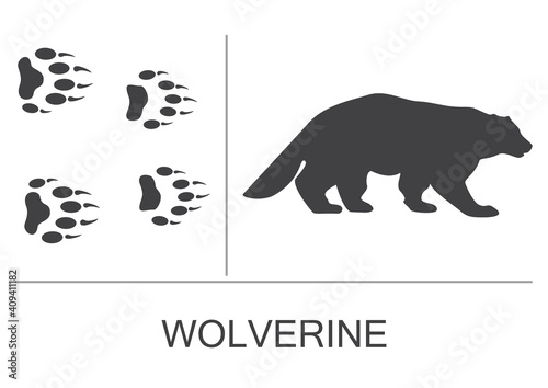 Fotografía Silhouette of a wolverine and prints of the hind and fore paws