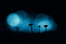 An Artistic Silhouettes Of Small Mushrooms With Colorful Bokeh In The Background. Small Fungi Growing On A Forest Floor.