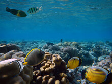 Coral Reef With Great Hard And Soft Corals At The Bottom Of Tropical Sea
