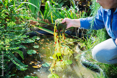 Carta da parati woman is cleaning garden pond from green algae