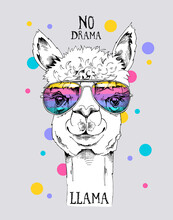 Funny Poster. Portrait Of A Alpaca In A Rainbow Glasses. No Drama, Llama - Lettering Quote. Humor Card, T-shirt Composition, Hand Drawn Style Print. Vector Illustration.