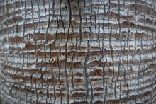 Closeup Shot Of The Texture Of A Palm Tree Trunk
