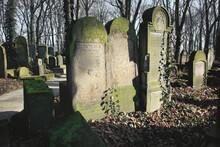 Gravestones Amidst The Undergrowth In The New Jewish Cemetery In Miodowa Street, Krakow, Poland. The Neglected, Overgrown Cemetery Is In The Historic Jewish Neighborhood Of Kazimierz.