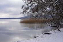 Winterliche, Idyllische Seenlandschaft Mit Schnee, Baum, Schilf Und Wald In Berlin (Müggelsee)