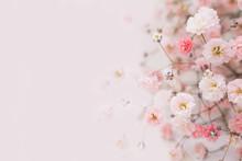 花の背景 カスミソウ