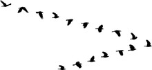 Isolated V Formation Of Birds