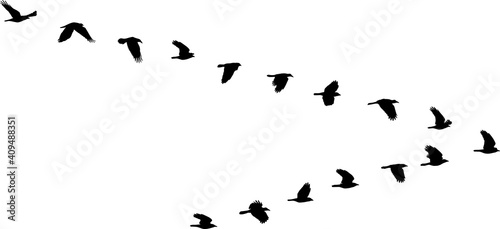 Stampa su Tela isolated V formation of birds