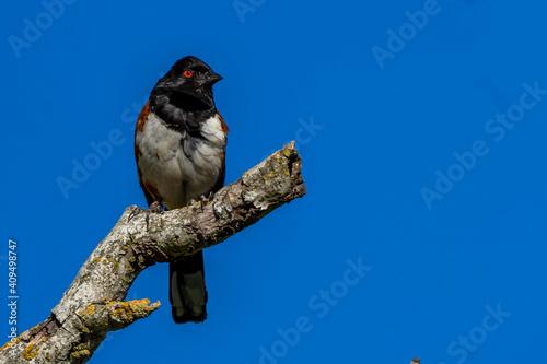 Fényképezés red billed hornbill