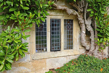 An Old Leaded Window With A Concrete Frame Under A Large Green Shrub In An Old English Country House