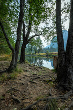 Trees Standing At Merced River Flowing Through Yosemite National Park