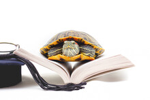 Turtle On Opened Book Against White Background, Close Up Wide Turtle