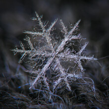 Snowflake On Dark Textured Background. Macro Photo Of Real Snow Crystal: Elegant Stellar Dendrite With Six Complex, Ornate Arms, Hexagonal Symmetry And Elegant Inner Details.
