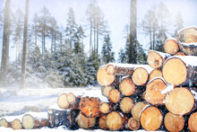 Log Trunks Pile, The Logging Timber Forest Wood Industry. Wooden Trunks Timber Harvesting In The Winter.