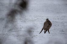 Deer In The Field In The Snow