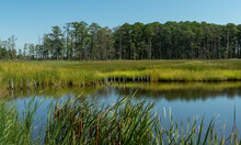 Coastal Tidal Wetlands On A Sunny Day