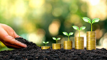 Hands That Are Putting Soil On Trees Growing On Gold Coins And Natural Background. Concept Of Successful Financial Growth And Business Management.