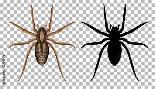 Fotomural Wolf spider with its silhouette isolated on transparent background