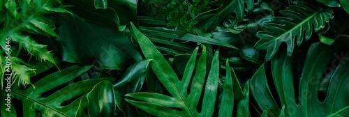 Vászonkép Abstract green leaves nature texture background