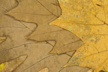 Full Frame Shot Of Dried Leaves In Different Colors And Shapes. Autumnal Concept