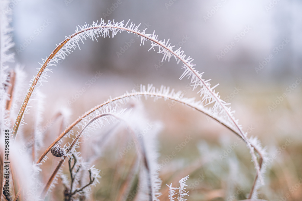 Fototapeta White prickly sharp frosty frost on the branches of trees. Winter day closeup, artistic background. Winter cold frozen nature macro, pastel colors, dramatic natural meadow and floral pattern