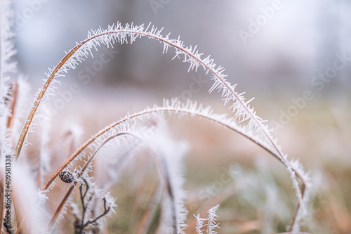 Fototapety, obrazy: White prickly sharp frosty frost on the branches of trees. Winter day closeup, artistic background. Winter cold frozen nature macro, pastel colors, dramatic natural meadow and floral pattern