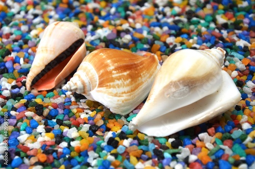 seashells on the beach Fototapet