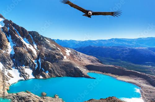 Fototapeta Condor in Patagonia obraz