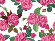Pink Roses Or Peonies With Leaves And Branches
