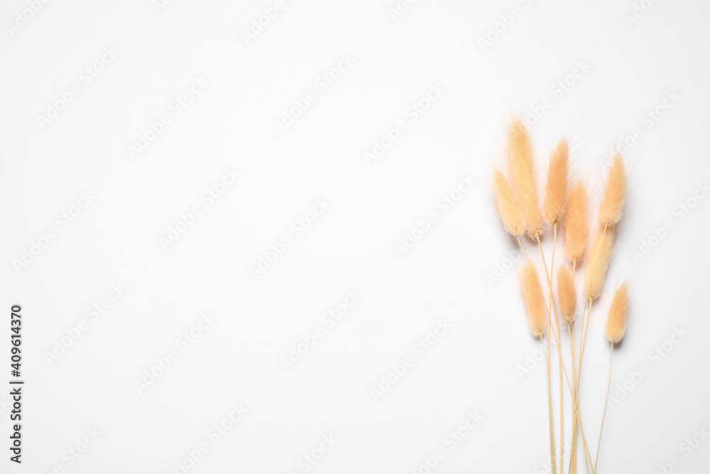 Fototapeta Bouquet of dried flowers on white background, top view