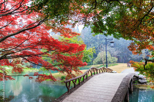 Fototapety, obrazy: Wonderful landscape showing a red tree laid upon a beautiful small bridge